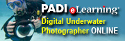 Start Your PADI Digital Underwater Photographer Course Online Right Now | PADI eLearning