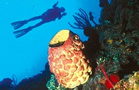 Dive the incredible reefs of central Cuba | Cuba Dive Research Trip | Contact us for details