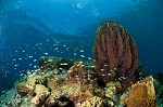 Dominica reef formation |