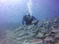 Scuba Center La Paz Dive Trip 2016 | Photo Credit: Scuba Center Dive Travel Specialist Tom Pederson